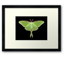 Luna Moth Painting Framed Print