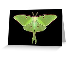 Luna Moth Painting Greeting Card