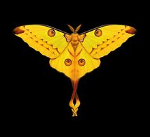 Comet Moth Painting by Mary Capaldi