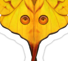 Comet Moth Painting Sticker