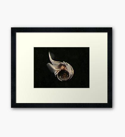 Sea Butterfly Framed Print
