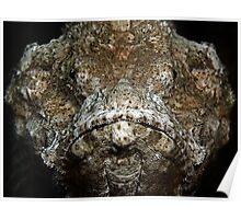 Scorpionfish Portrait Poster