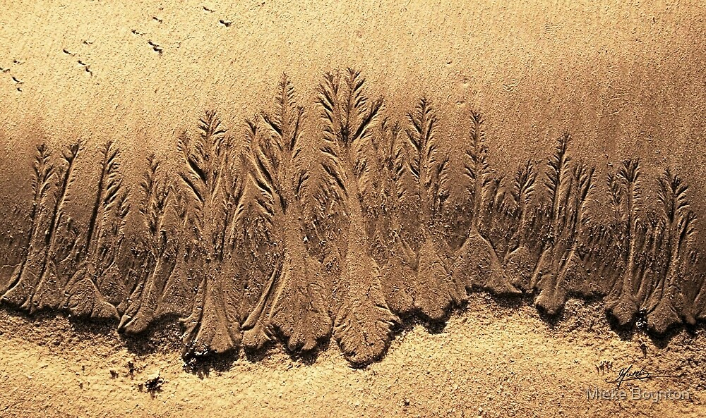 Sand Forest  by Mieke Boynton