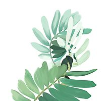 Green plant leaves Photographic Print