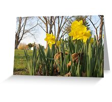Spring has Arrived Greeting Card