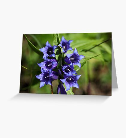 Willow gentian (Gentiana asclepiadea) Greeting Card