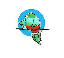 Cute Resplendent Quetzal Photographic Print