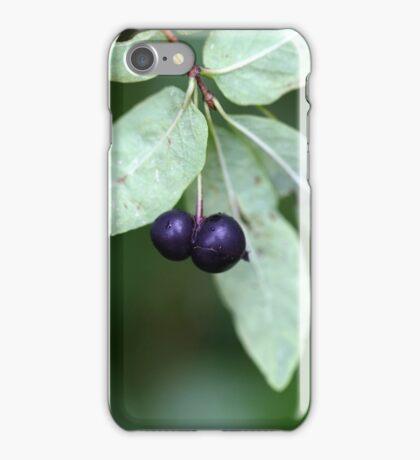 Black berried honeysuckle (Lonicera nigra) iPhone Case/Skin