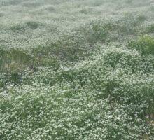 frost on green meadow Sticker