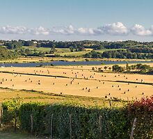 Hay Fields by Elaine Teague