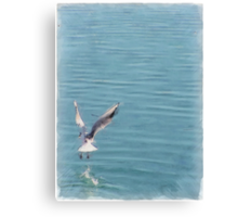 Seagull over the water Canvas Print