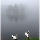 'Swans in Fog' by Jerry Kirk