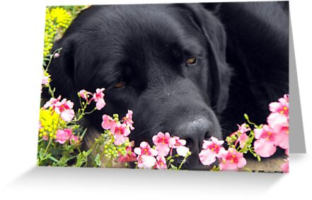 A Bed of Flowers by trish725