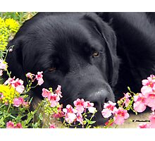 A Bed of Flowers Photographic Print