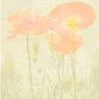 Monet Style Poppies by Catherine Hamilton-Veal  ©
