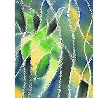 Whimsical Garden Organic Decor II Photographic Print