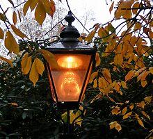 Lamp Light by AnnDixon