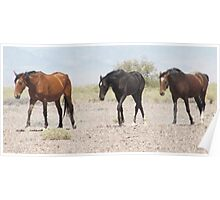 Wild Horses at Death Valley Junction Poster