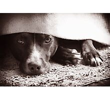 Stan the Dog - You Can't See Me! Photographic Print