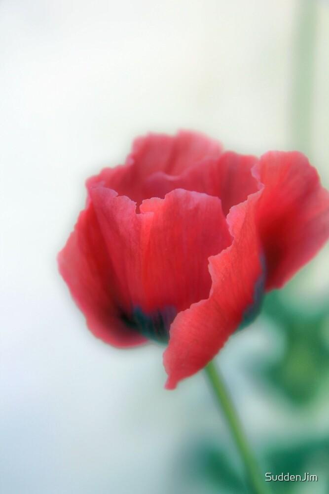 Poppy by SuddenJim