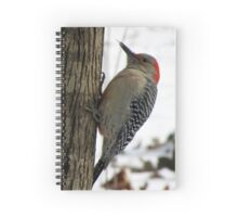 Red-bellied Woodpecker sticks out tongue Spiral Notebook
