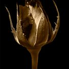 Sepia Bud at Midnight by Heather Friedman