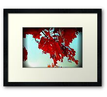 Fall Leaves at Metro Campus Framed Print