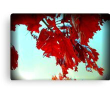 Fall Leaves at Metro Campus Canvas Print