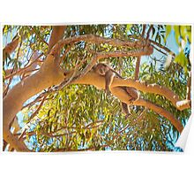 Life's Hard, Yanchep National Park Poster