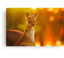 Sunset Joey, Yanchep National Park Canvas Print