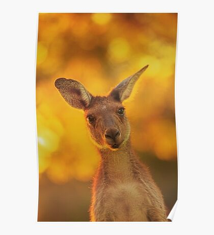 What's Up, Yanchep National Park Poster