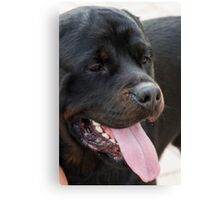 labrador retrive Canvas Print
