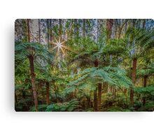 Sunlit Glade, Marysville, Victoria Canvas Print