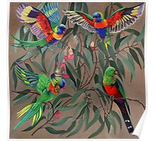 Birds from Paradise. Rosellas Poster