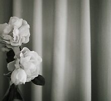 Analog silver gelatin 35mm film photo of white rose flowers in vase by edwardolive