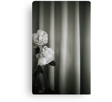 Analog silver gelatin 35mm film photo of white rose flowers in vase Canvas Print