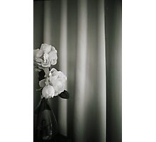 Analog silver gelatin 35mm film photo of white rose flowers in vase Photographic Print