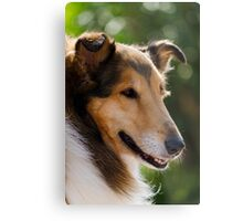cute lessie dog Metal Print