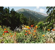Mountain garden Photographic Print