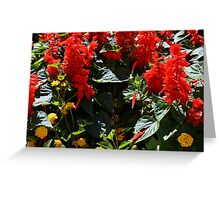 Red flowers texture Greeting Card