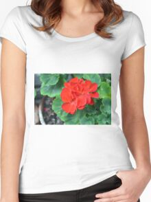 Red flower in the pot with many green leaves Women's Fitted Scoop T-Shirt