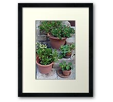 Flower pots on stone stairs Framed Print