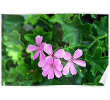 Pink flowers on green leaves background Poster