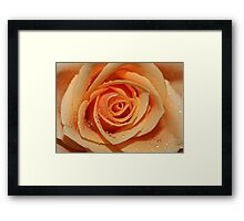 Orange Rose with Tear Drops Framed Print