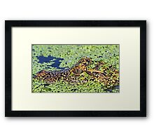 Baby gator in camouflage Framed Print