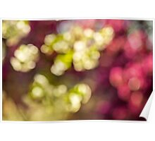 Abstract light of the tree flowers Poster