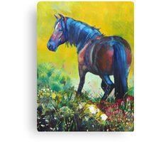 Wild Horse On Dartmoor Painting Canvas Print