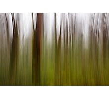abstract motion blur of trees Photographic Print