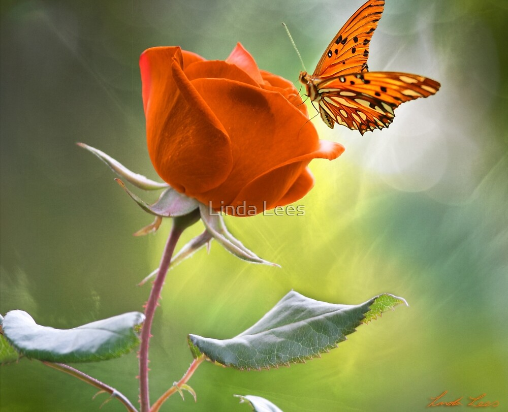 The Flower and the Butterfly by Linda Lees