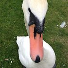 Linlithgow Swan.  by LBMcNicoll
